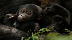 Cute Monkey 25515