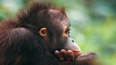 Cute Monkey Wallpaper 25502