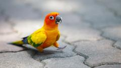 Cute Parrot Wallpaper 19874