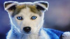 Cute Puppy 19973
