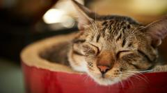 Cute Sleeping Cat Wallpaper 40313