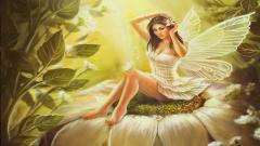Fairy Wallpaper 7848