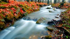 Fantastic Forest Stream Wallpaper 34451