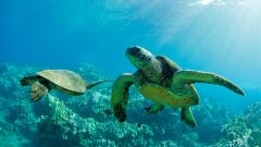Fantastic Turtle Wallpaper 41457