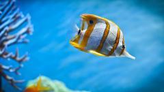 Fish Wallpaper 22318