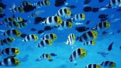 Fish Wallpapers 22315