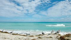 Florida Beach Wallpaper 20653