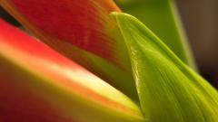 Flower Petal 25877