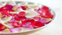 Flower Petal Wallpaper 25895