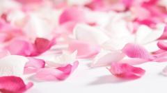 Flower Petals 25880