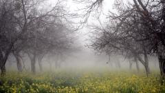 Foggy 31381