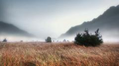 Foggy Wallpaper 31380
