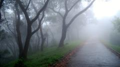 Foggy Wallpaper 31397