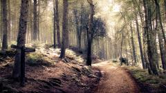 Forest Path HD 32572