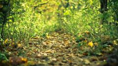 Forest Path HD 32579