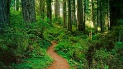 Forest Path Pictures 32576