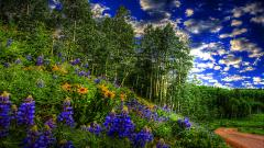 Forest Path Wallpaper 32563