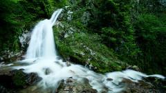 Forest Stream 34435