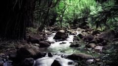 Forest Stream 34437