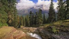Forest Stream 34450