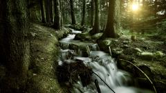 Forest Stream HD 34445