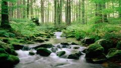 Forest Stream Pictures 34427