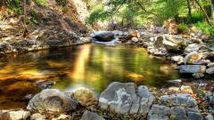 Forest Stream Pictures 34440