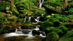 Forest Stream Wallpaper 34431