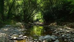 Forest Stream Wallpapers 34441