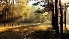 Forest Sun 33423