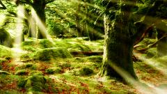 Forest Sun 33428