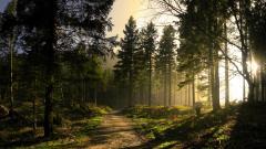 Forest Sun 33430