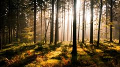 Forest Sun HD 33424