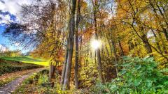 Forest Sun Wallpaper 33435