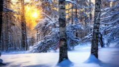 Forest Sun Wallpaper HD 33418