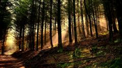 Forest Sun Wallpapers 33432