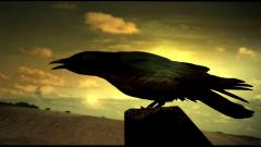 Free Crow Wallpaper 35496