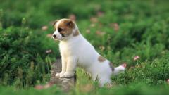 Free Cute Puppy Wallpaper 19971