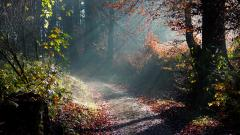 Free Forest Path Wallpaper 32582