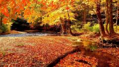 Free Forest Stream Wallpaper 34432