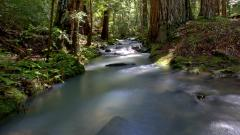Free Forest Stream Wallpaper 34452