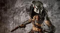 Free Predator Wallpaper 40469