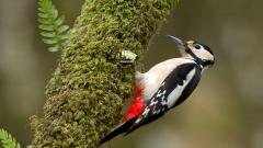 Free Woodpecker Wallpaper 39725