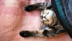 Funny Sleeping Cat Wallpaper 40321
