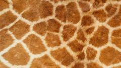 Giraffe Pattern 11460