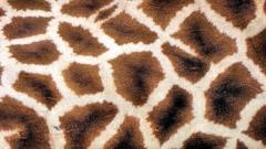 Giraffe Pattern 11464