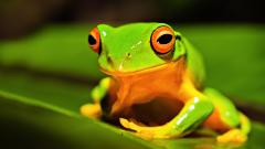Green Frog Background 33410