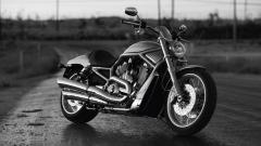 Harley Davidson Wallpaper 16889