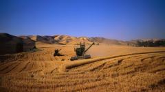 Harvest 37767