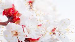 HD Flower Petals 25874